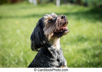 animaux, autour de, maison, chien, courant, yard, arrière-cour, lawn., home.