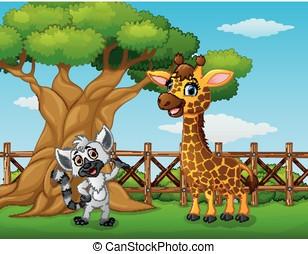 animaux, barrière, intérieur, arbre, à côté de, girafe, raton laveur