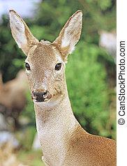 animaux, cerf, chasseurs, jachère, chassé, milieu, bois, forêt, sauvage