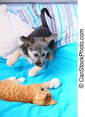 animaux, chez soi, chien, et, chat, jouer ensemble, lit