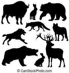 animaux, contour, silhouettes, vecteur, forêt noire, sauvage