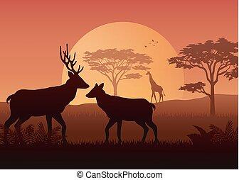 animaux, coucher soleil, savanah, silhouette