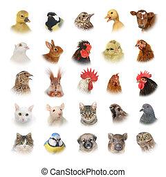 animaux, et, oiseaux