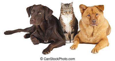 animaux familiers, ensemble