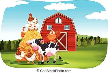 animaux ferme, dans, les, champ