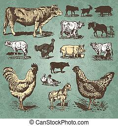 animaux ferme, vendange, ensemble, (vector)
