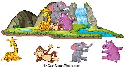 animaux, scène, quatre, chute eau, types