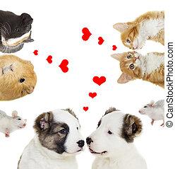 animaux, valentines, deux jours