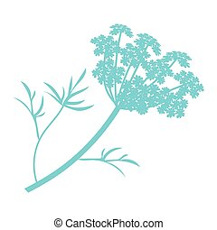 Anise plant illustration, drawing, engraving, ink, line art, vector