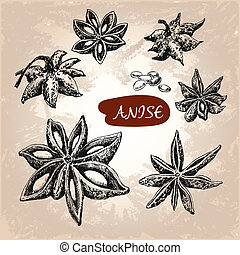 Anise. Set of hand drawn graphic illustrations