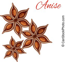 Anise spice vector isolated icon