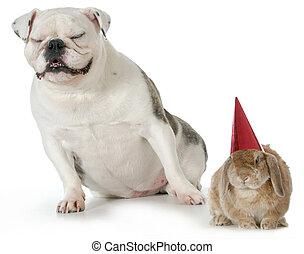 aniversário, Animais estimação