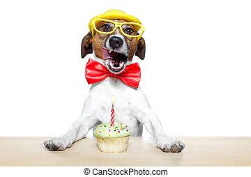 aniversário, cão, cupcake
