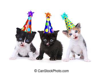 aniversário, canção, cantando, gatinhos, branco, fundo