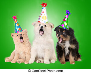aniversário, cantando, filhote cachorro, cachorros