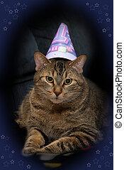 aniversário, gato