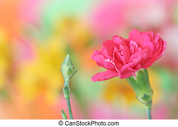 anjer, roze