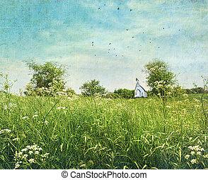 anne, reine, wildflowers, dentelle