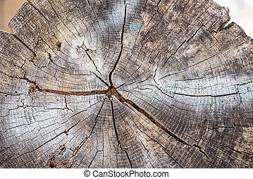 anneaux arbre