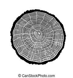 anneaux arbre, cracks.