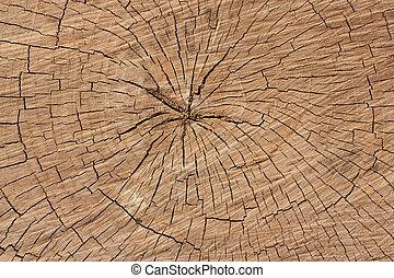 anneaux arbre, fond