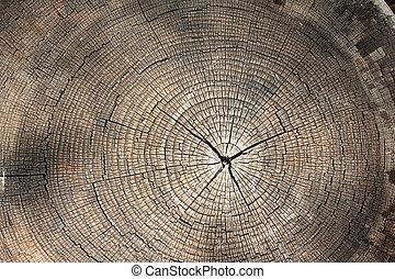 anneaux arbre, texture, fond