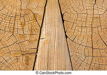 anneaux, croissance, bois