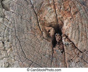 anneaux, section, arbre, croix, croissance, fond, coffre, projection