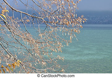 Annecy lake and autumn leaves