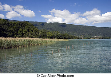 Annecy lake and reeds bed protected by wooden poles