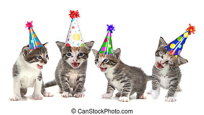 anniversaire, chanson, chant, chatons, blanc, fond