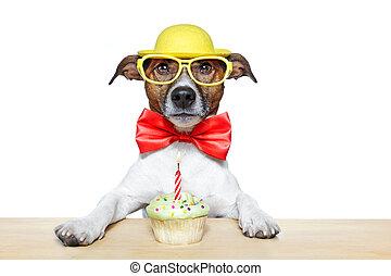 anniversaire, chien, petit gâteau