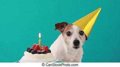 anniversaire, mignon, gâteau, fond, chien, bleu