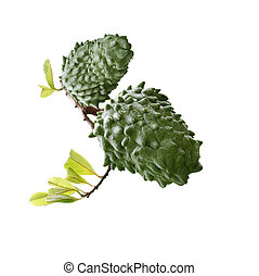 Annona Muricata soursop fruit isolated on white background