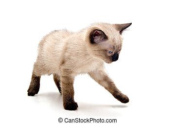 Annoyed Small Kitten - Small kitten looking annoyed, walking...
