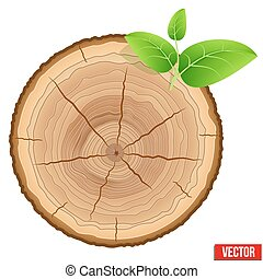 Annual tree growth rings of the cross-section wood trunk with green leaves