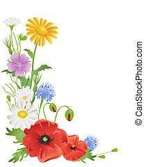 annual wildflowers - an illustration of an arrangement of...