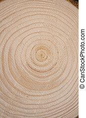 annuel, arbre, bois, section transversale, pin, rings., coffre, close-up., morceau