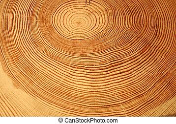 ano, anéis, de, um, árvore