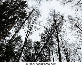 anschauen, bäume, in, wald
