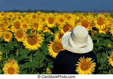 anschauen, sonnenblumen