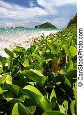 Anse de Sables Beach - St Lucia