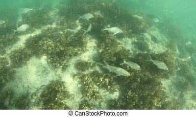 anse Takamaka beach Seychelles fishes - fishes of underwater...
