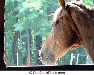 anseio, cavalo, 2