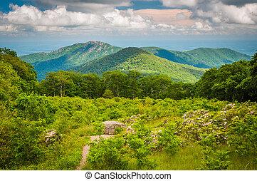ansicht, von, altes , lappen, berg, von, durchfahrt, übersehen, auf, silhouettentrieb, in, shenandoah nationalpark, virginia.
