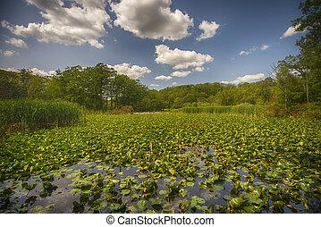 ansicht, von, sumpfland, landschaftsbild