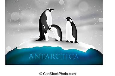 antártica, pingüins