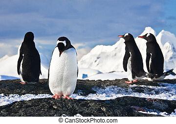 antártica, pingüins, rocha