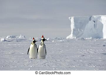 antártico, navidad