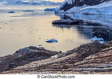antártico, vaya barco, entre, icebergs, y, gentoo, pingüinos, reunido, en, el, orilla rocosa, de, neco, bahía, antártida